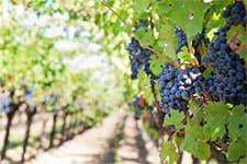 Vakantiehuis Frankrijk wijngebied